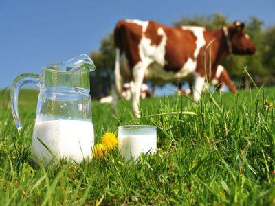un-nou-ajutor-financiar-pentru-fermierii-care-detin-intre-3-si-9-vaci-de-lapte