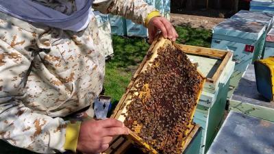 usr-cere-retrimiterea-legii-apiculturii-in-comisie