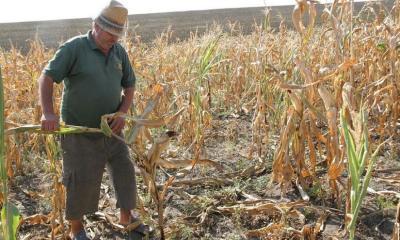 lege-pentru-producatorii-agricoli-afectati-de-seceta-inundatii-sau-temperaturi-scazute