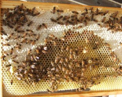 ce-spune-asociatia-crescatorilor-de-albine-despre-noua-lege-a-apiculturii