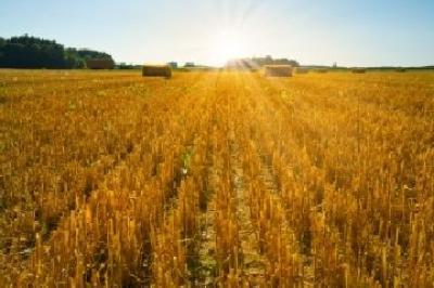 astazi-au-inceput-negocierile-pentru-legea-privind-vanzarea-cumpararea-de-teren-agricol