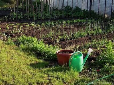ce-lucrari-se-efectueaza-in-luna-mai-in-legumicultura
