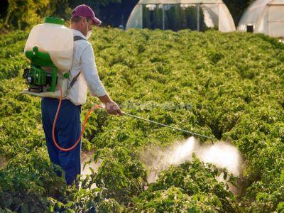 tratamente-fitosanitare-recomandate-in-culturile-de-legume