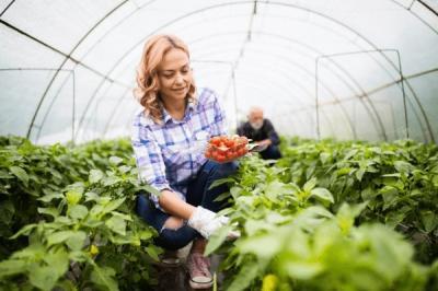 seminte-de-legume-profesionale-vs-seminte-de-legume-obisnuite-care-este-cea-mai-buna-alegere