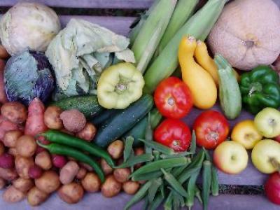 se-cauta-solutii-pentru-reducerea-risipei-de-alimente-la-nivel-ue-dar-si-national