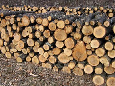 romsilva-va-livra-circa-un-milion-de-metri-cubi-de-lemn-de-foc-pana-la-sfarsitul-anului