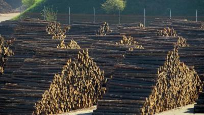 alexe-mediu-aproape-40-de-milioane-mc-de-lemn-taiat-ilegal