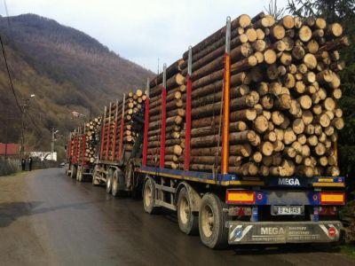 romania-a-devenit-in-premiera-importator-net-de-lemn