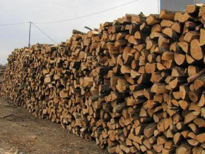 trei-milioane-de-metri-cubi-de-lemn-adjudecati-la-licitatia-principala-organizata-in-luna-decembrie