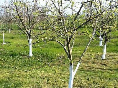 buletin-agrometeorologic-pentru-perioada-16-20-aprilie