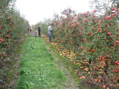 o-noua-schema-de-ajutor-pentru-producatorii-de-fructe-si-legume