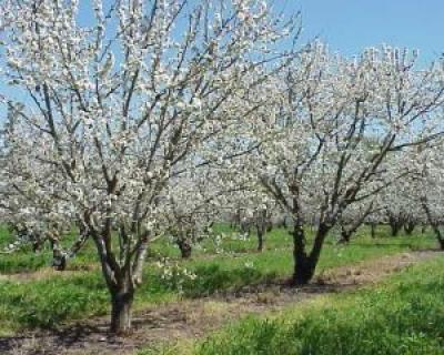 taierea-pomilor-fructiferi