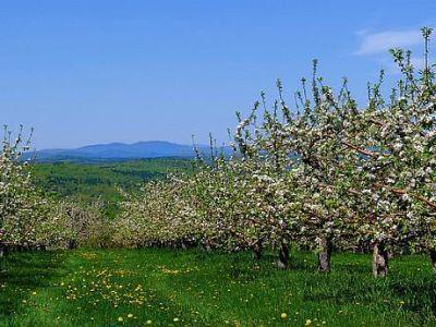 buletin-agrometeorologic-pentru-perioada-5-11-mai