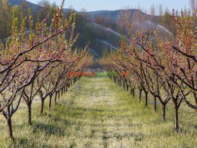 madr-recomanda-inceperea-tratamentelor-fitosanitare-in-culturi