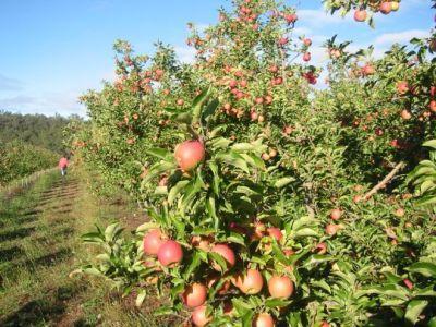 ministerul-agriculturii-vrea-inca-80000-de-hectare-cu-pomi-fructiferi-pana-in-2020