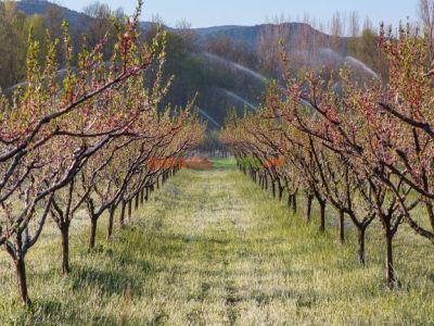 268-de-milioane-de-euro-solicitate-pentru-investitii-in-pomicultura