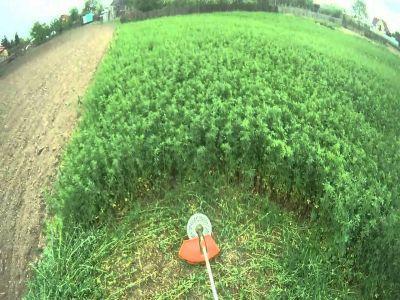 termen-limita-pentru-fermierii-care-vor-sa-incazeze-sprijinul-cuplat-pentru-soia-si-lucerna