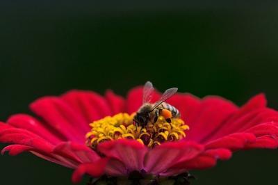 madr-ar-putea-acorda-apicultorilor-aproape-24-de-lei-per-familie-de-albine