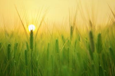 calendar-ce-lucrari-agricole-efectuam-in-luna-martie