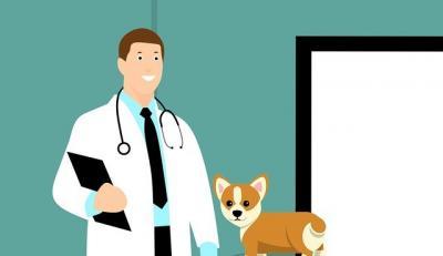 medicii-veterinari-si-sanatatea-publica-lucruri-bine-de-stiut
