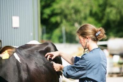 tinerii-veterinari-spun-ca-nu-au-loc-in-sistem-din-pricina-nepotismului