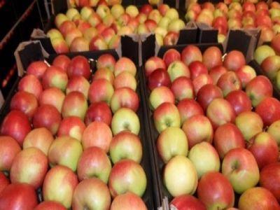 a-fost-aprobat-sprijinul-financiar-pentru-producatorii-de-fructe