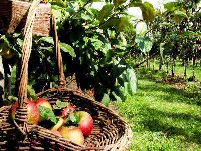 agricultura-bio-o-afacere-tot-mai-profitabila-pentru-fermieri