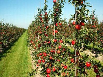 fonduri-europene-pentru-tinerii-fermieri-care-vor-sa-infiinteze-livezi