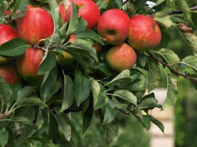 producatorii-romani-de-fructe-isi-vor-distribui-marfa-si-elevilor