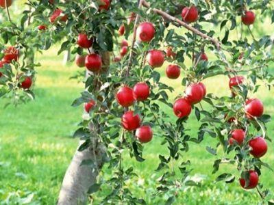 cum-pot-accesa-tinerii-fermieri-fonduri-europene-pentru-infiintarea-de-livezi