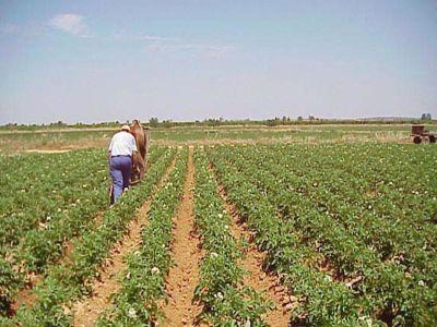 micii-fermieri-vor-beneficia-de-servicii-de-consiliere-asigurate-de-madr