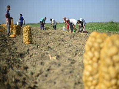 conditiile-de-eligibilitate-mai-blande-pentru-micii-fermieri-care-vor-sa-obtina-finantari-prin-pndr