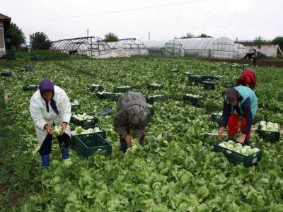 cec-bank-a-lansat-microcreditele-pentru-agricultura