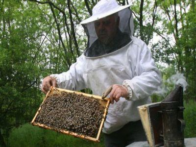 peste-21000-de-investitii-apicole-finantate-prin-masuri-pndr