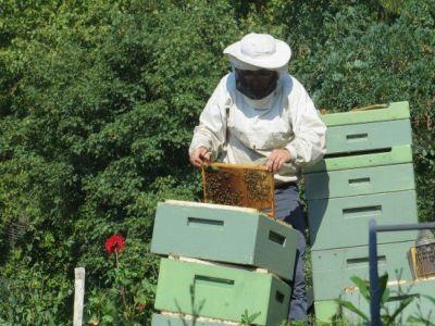 curs-de-apicultura-ecologica-pentru-crescatorii-de-albine