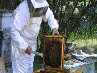 apicultorii-sunt-optimisti-in-privinta-productiei-de-miere-din-acest-an