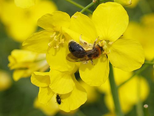 mierea-romaneasca-premiata-la-congresul-international-apimondia-de-la-buenos-aires