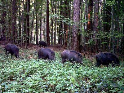 bulgarii-construiesc-un-gard-la-granita-cu-romania-pentru-a-se-proteja-de-pesta-porcina-africana