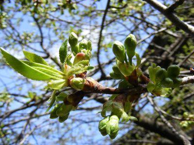 buletin-agrometeorologic-pentru-perioada-3-7-aprilie