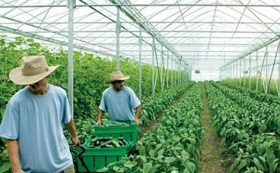 timisoara-munca-in-agricultura-in-danemarca-si-portugalia