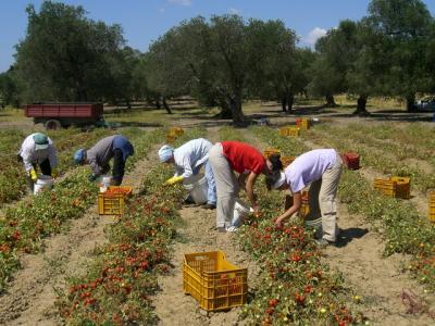 munca-la-negru-in-agricultura-este-un-fenomen-scapat-de-sub-control