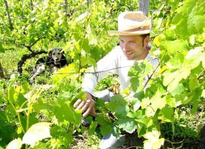 locuri-de-munca-in-germania-in-viticultura