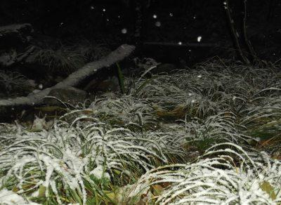 romania-sub-cod-galben-de-ninsori-unde-va-ninge-si-cum-va-fi-vremea-pana-pe-24-decembrie