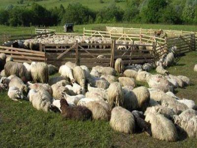 plati-de-aproape-15-milioane-de-lei-pentru-crescatorii-de-animale