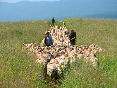 de-luni-pasunatul-animalelor-pe-terenurile-agricole-este-interzis