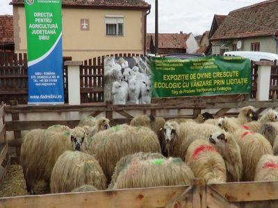 dovada-de-solidaritate-cu-fermierul-sibian-care-si-a-pierdut-toate-oile-intr-un-incendiu