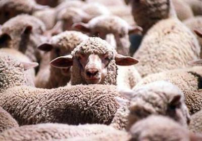 cererile-pentru-subventia-la-ovine-si-caprine-se-depun-pana-pe-18-mai