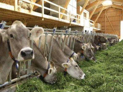 organizatia-mondiala-a-sanatatii-recomanda-stoparea-utilizarii-antibioticelor-la-animalele-sanatoase