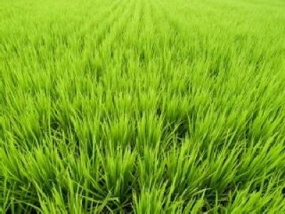 banii-restanti-din-2009-pentru-sectorul-vegetal-nu-vor-mai-fi-acordati