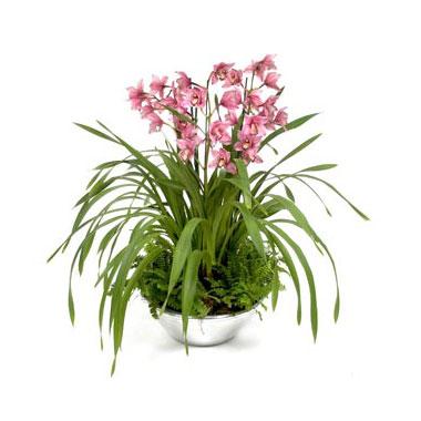 plante-exotice-usor-de-crescut-in-apartament-orhideea-cymbidium